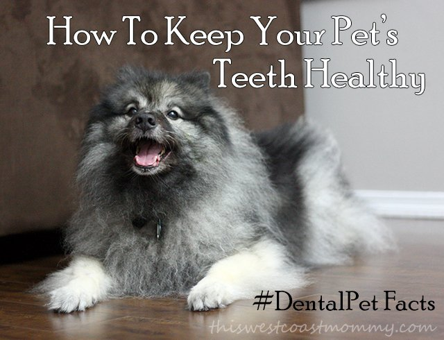 How to keep your pet's teeth healthy