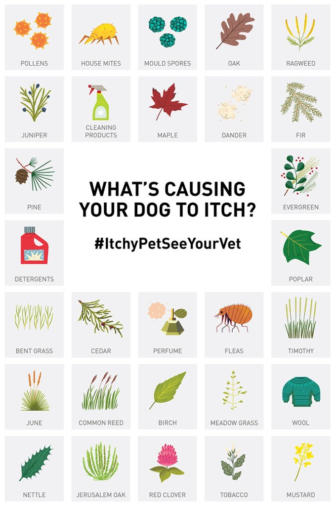 What's causing your dog to itch? #ItchyPetSeeYourVet