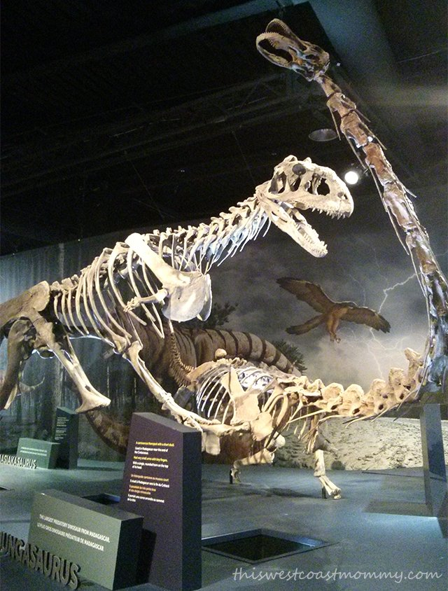 Science World - Majungasaurus and Rapetosaurus