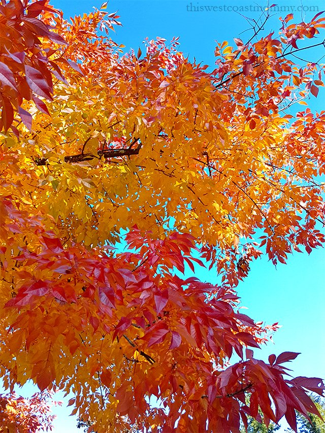 Early fall is a magical time of year here in the Lower Mainland.