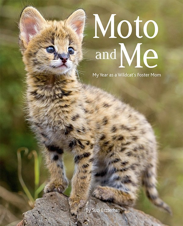 """""""Moto and Me: My Year as a Wildcat's Foster Mom"""" by Suzi Eszterhas"""